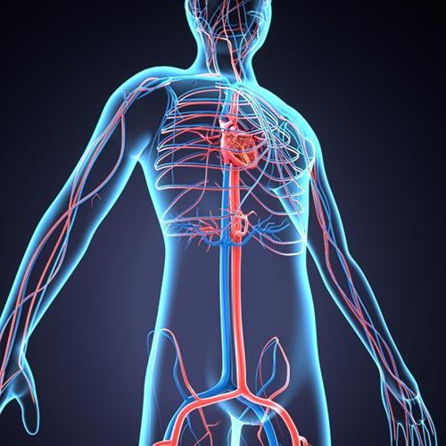 Heart Disease Clinical Trials Cardiovascular Disease Study Connect